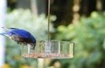 The best and brightest: How to attract the most colorful birds to your backyard