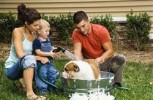 Tips for grooming your furry friends