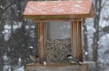 Brighten your yard this winter with the help of wild birds
